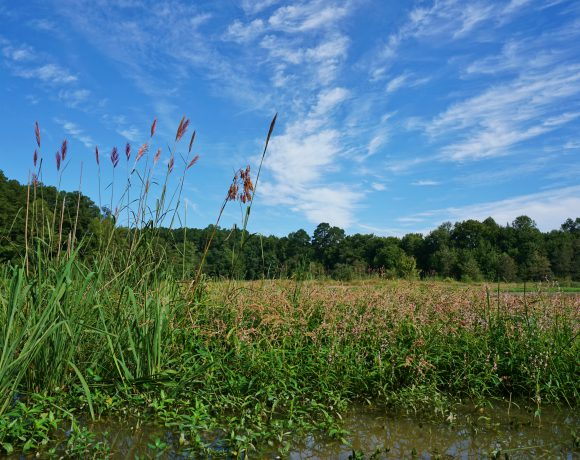 Compensatory Stream and Wetland Mitigation in North Carolina: An Evaluation of Regulatory Success