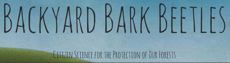 Backyard Bark Beetles