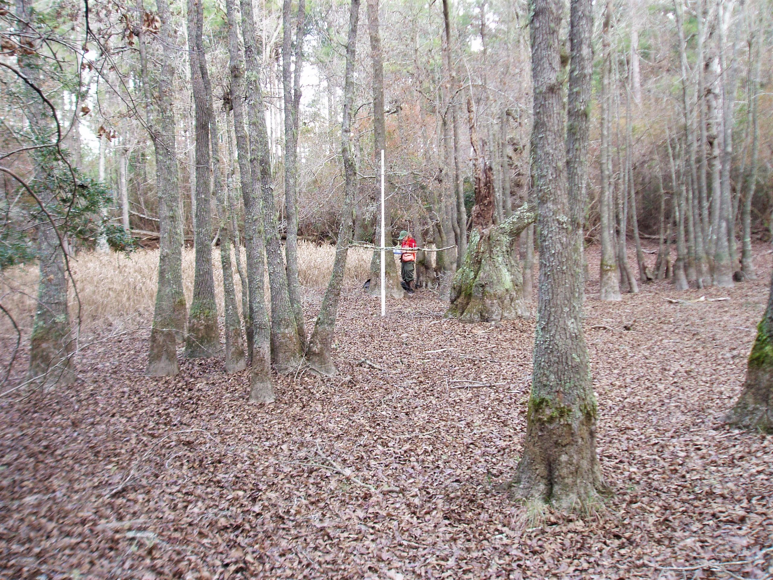 An isolated wetland in North Carolina