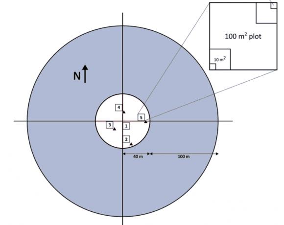 NWCA protocol sampling layout