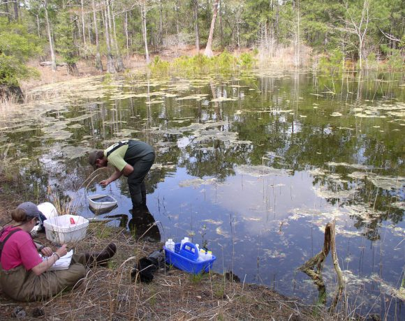 Quantifying Urban Wetland Water Quality Benefits
