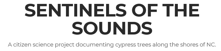 Sentinels of the Sound - NC cypress trees