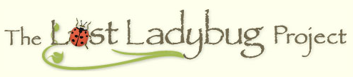 The Lost Ladybug Project