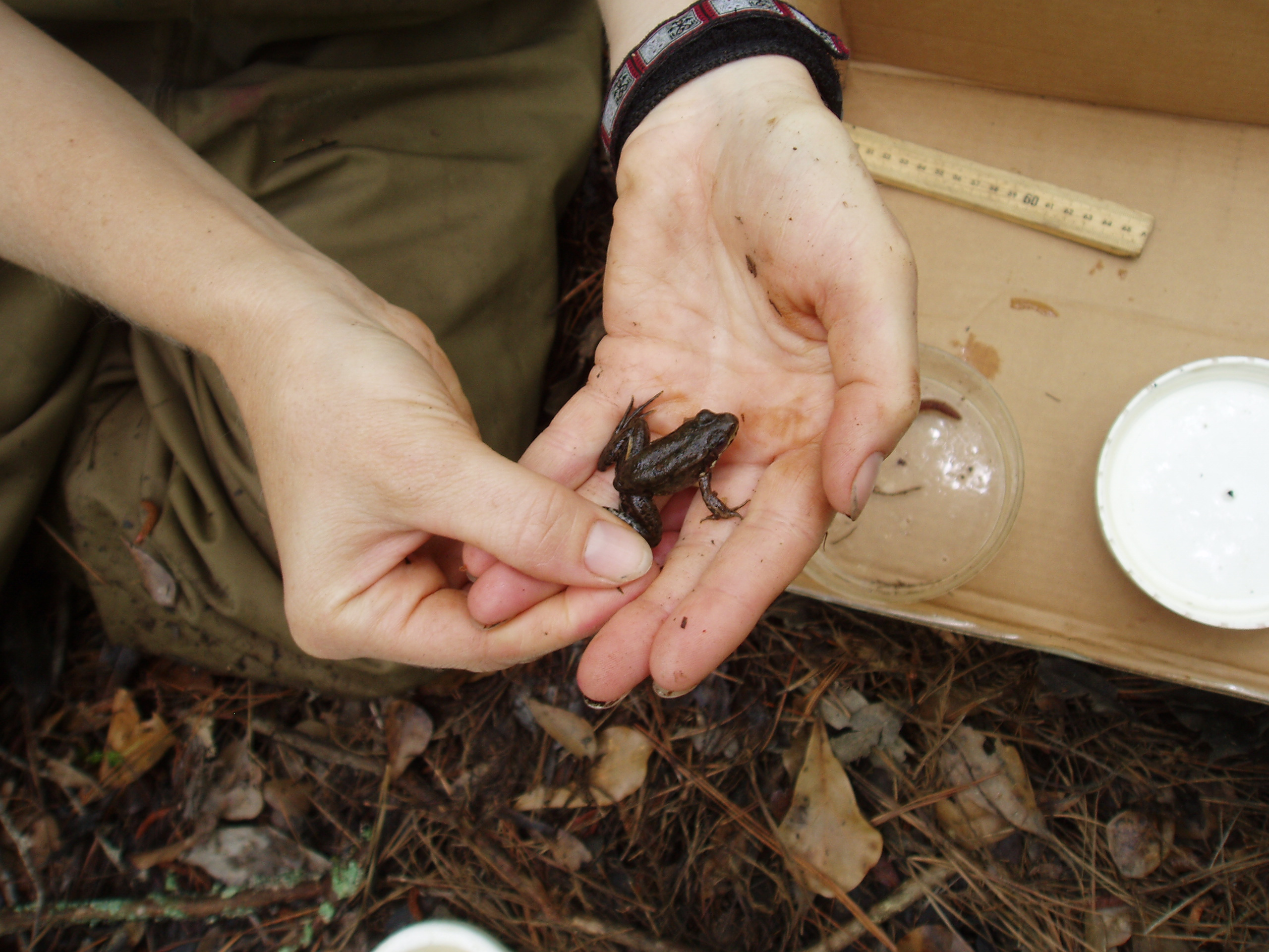 Amphibians were surveyed as part of the Level 3 detailed assessments
