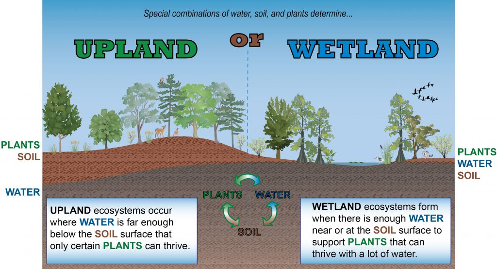 Conceptual Diagram Wetland Vs Upland Kg 02 North Carolina Wetlands