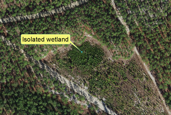 Example of an isolated wetland in North Carolina′s Coastal Plain