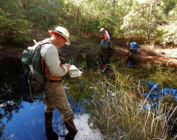 Compensatory stream and wetland mitigation in North Carolina: an evaluation of regulatory success