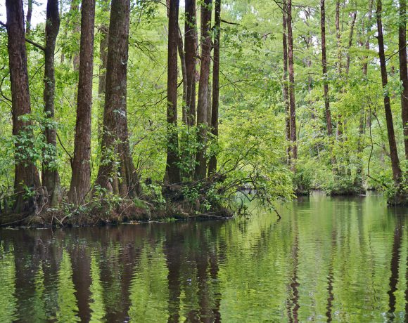 Southeast Wetland Monitoring Intensification Project – Forested Wetlands
