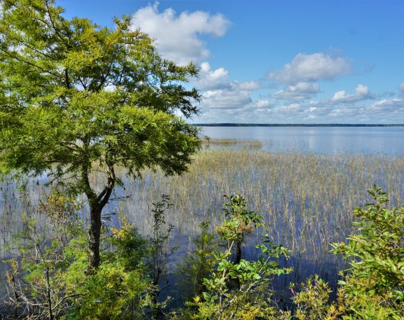 Unique Wetlands: Developing Policy Guidelines and Locating Unique Wetlands
