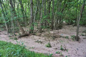 Too much sediment washing into a wetland can destroy habitat and reduce flood capacity.