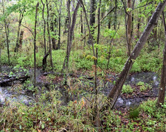 Study of Headwater Wetlands in the North Carolina Coastal Plain and Piedmont