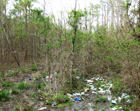 Trash in wetlands endangers animals and damages their habitats.
